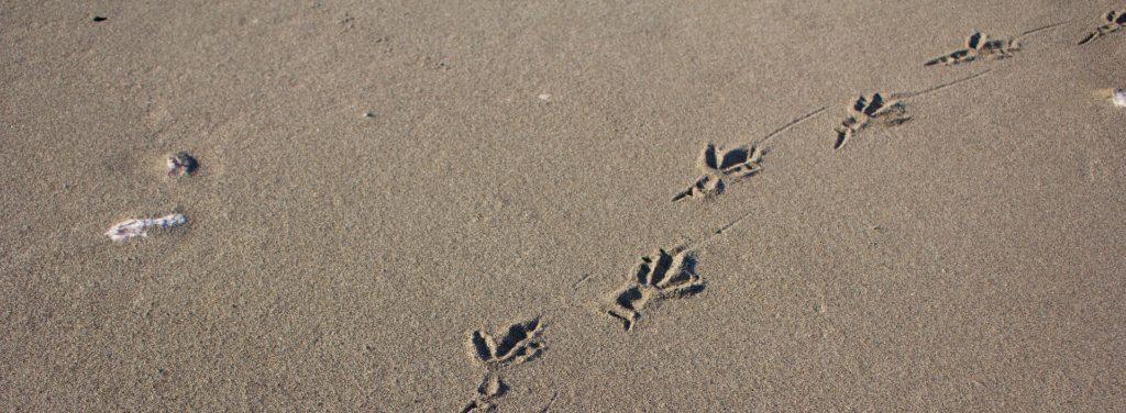 empreinte dans le sable
