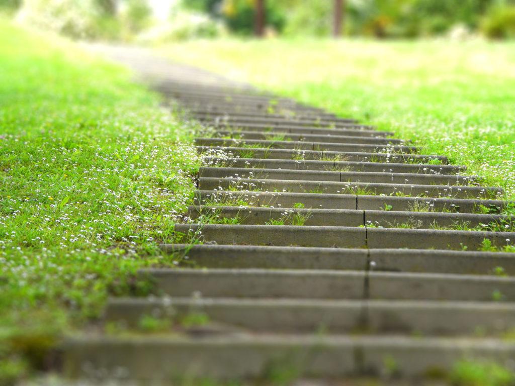Chemin en herbe